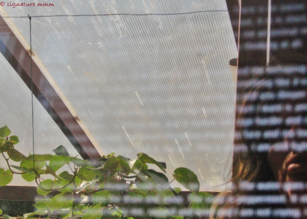 And for the last one: a reminder of my first blog's header. My reflection on computer screen with kiwi plant in Piran. I filled it up but is still here: https://manjamaksimovic.wordpress.com/